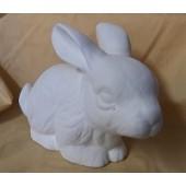 rabbit 7